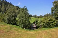 DSC_1043 (willkayak) Tags: verde austria prato montagna legno pascolo ricovero