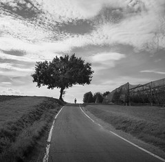 Protected (Balthus Van Tassel) Tags: road bw tree cycling countryside oak gr canopy ricoh