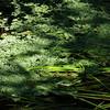 a brook's garden (vertblu) Tags: shadow green shades vert greens brook emerald duckweed shadesofgreen simplenature wasserlinse greenbeautyforlife vertblu