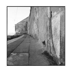 the hole • lisbon, portugal • 2015 (lem's) Tags: wall port cat chat hole lisboa lisbon bronica mur quai trou lisbonne urbex zenza dosk thecatwhoturnedonandoff littledoglaughednoiret
