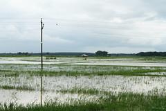 Rain water (Rhivu_Ray) Tags: india landscape farmland rainwater rainyseason basraghat
