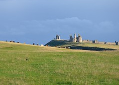 Dunstanburgh Castle under vivd sky - castle, cows and a single swallow (Fiona in Eden) Tags: storm castle clouds coast northumberland craster approachingstorm dunstanburghcastle stoswaldsway