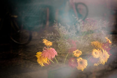 windowflowers (torivonglory) Tags: flowers window glass yellow telaviv blumen romance dirty gelb fading transparent dirtywindow romantik durchsichtig welk emptyshop windowpain blumenstrauss