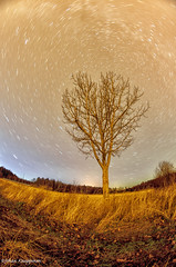 Underneath the stars (- Man from the North -) Tags: longexposure autumn trees sky tree fall field grass leaves forest finland stars star evening nikon bare wideangle fisheye slowshutter westcoast longshutter startrails ostrobothnia samyang nikond7000 samyang8mmf35