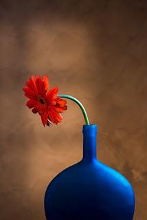 Blue Vase with Red Gerber