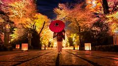 晩秋、石山寺をゆく (のの♪) Tags: 紅葉 dd 夜景 着物 ライトアップ 和傘 dollfiedream