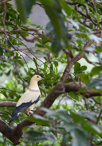 Hongkong: Natur