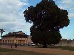 Centre d'Interprtation de L'Architecture et du Patrimoine, Saint-Laurent-du-Maroni, Guyane, dcembre 2015 (Bagolina) Tags: manguier guyane bagne saintlaurentdumaroni centredinterprtation