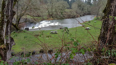 2015-112703 (jjdun7) Tags: water oregon forest landscape waterfall scottsmills