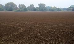 06-IMG_6164 (hemingwayfoto) Tags: acker busch herbst kunst landwirtschaft leinemasch natur oktober spur wanderung