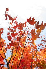 Fall (MayYeo) Tags: fall ontario ottawa canada leaves autumn