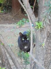 465 (en-ri) Tags: gatto randagio cat miao nero black sony sonysti alberello