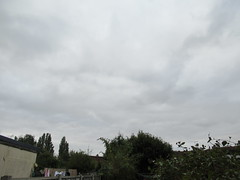 Friday, 7th, Feeling chilly IMG_7853 (tomylees) Tags: october essex morning autumn 7th 2016 friday weather dull