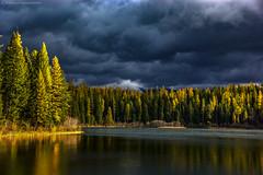 Lion Lake Foliage (Explored) (steve rubin-writer) Tags: lake foliage larch conifer fall colors reflection water montana lion explore