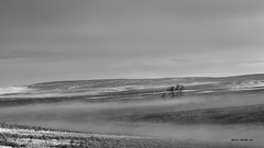 Between This Nowhere (Chris Lakoduk) Tags: landscapephotography landscape blackandwhitephotography blackandwhite blackandwhitelandscape foggy fog grantcountywa grantcountywashingtonstate isolated trees distant place valley hills washington state