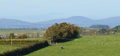 Ayrshire, Scotland. Landscape. (Phineas Redux) Tags: ayrshirescotland ayrshire scotland scottishlandscape