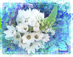 Playing with colours (boeckli) Tags: flowers pflanzen plants plant outdoor bloom blossom blüten blumen bunt farbig flower bright textures texturen blooms blossoms painterly blue blau colourful rahmen photoborder tte2 topaztextureeffects pastel serene drawing