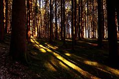 Herbst (Stephi 2006) Tags: ofterschwang bayern deutschland