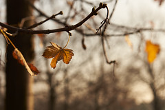 autumn (Milos Eskert) Tags: nikond750 nikon2470mm