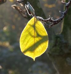 leaf & shadow (Eisgräfin (very busy)) Tags: leaf shadow autumn blatt schatten herbst eisgräfin hannover stadtpark germany
