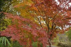 Hope for Hope (kzmiz) Tags: nikond800e japan saitama hikigun namegawamachi yamada musashi shinrin koen park