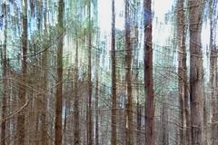 Fort en fil (sergecos) Tags: nature arbres trees fort forest fil graphisme graphic sony lignes lines