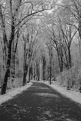 Winter Wonderland (EyeoftheImage) Tags: amazing beautiful bestshotoftheday breathtaking blackandwhite blackandwhitephotography blackandwhitepics blackandwhiteonly blackandwhitephotos blackwhite bnw bnwnature capturing capture country discovery depthoffield dof exploring earth exquisite explore forests forest globe greatphotographers greatnature landscape landscapes majestic newengland ngc nature picturesque powerful rural ruralamerica travel trees tree weather winter wilderness winterscene