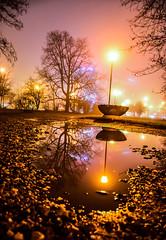Foggy night (Marco Sky) Tags: nikon d5300 park poland night lodz tree silhouette water reflection puddle poniatowskiego