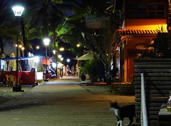 Stray Cats Everywhere (pics.ferr) Tags: street cat straycat bahia morrodesaopaulo brazil brasil streetlamp night nightlights colours