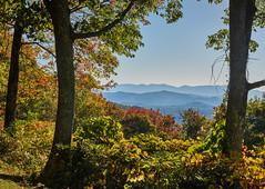 Blue Ridge Mountains (Tim Ravenscroft) Tags: blueridgemountains landscape foliage fall autumn northcarolina usa