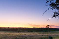 DSC_2608 (danieleeffe1) Tags: wine wineries walking am early sunrise morning sun grass sky australia countriside roadtrip walkabout amazing landscapes trees cangaroos oz sole erba fresco mattino alba happy happydays felice giorno