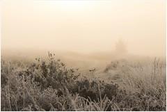 vanisch (HP019864) (Hetwie) Tags: natuur frost ijs heather nachtvorst ice zonsopkomst kou rijp nature sunrise ochtend strabrechtseheide strabrecht frozen vorst heide lierop noordbrabant nederland