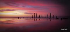 port_willunga_pink_reflections- (terencemay11) Tags: beach sunset nikon d750 pink pinkclouds pinksunset beautiful light relections reflection portwillunga southaustralia australia relax poles jetty old