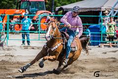 Gymkhana Falardeau21446-Edit (Glenn Fullum) Tags: horse nikon barrels sigma full frame chevaux baril gymkhana 70200f28 d610 sigma70200 falardeau