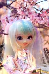 Finding Nille (Thai) Tags: toys doll pullip custom hanami sakuramatsuri idril flordecerejeira sakuras pullipdoll fullcustom pullipfullcustom parquedascerejeiras groovedoll brdoll