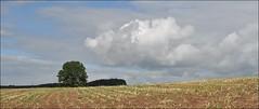 Erntezeit (Uli He - Fotofee) Tags: nikon wasser herbst himmel mais uli baum ulrike rhn ernte wanderung wasserkuppe himmlisch pftze herbstlich hergert herbstlicht stellberg erntezeit nikond90 fotofee ulrikehe ulrikehergert ulihe