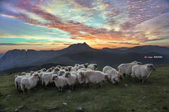Crepúsculo antes de amanecer (Jabi Artaraz) Tags: zb calendario rebaño euskoflickr jartaraz