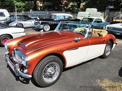 Austin Healey 3000 - Krefeld Mo_s Bikertreff_9498_2015-08-23 (linie305) Tags: auto show classic vintage austin mos germany deutschland automobile meeting vehicles event vehicle krefeld oldtimer british autos 3000 carshow healey fahrzeuge youngtimer 2015 kfz bikertreff carsandbikes carsbikes britcar kraftfahrzeuge worldcars carmeeting saariysqualitypictures mosbikertreff radfahrzeuge