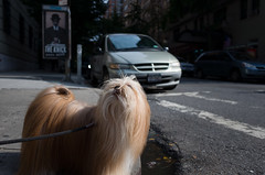 upper west side (Charley Lhasa) Tags: street nyc newyorkcity dog ny newyork raw walk manhattan 28mm sidewalk upperwestside charley uws lightroom lhasaapso adobelightroom charleylhasa ricohgrii software:adobe=lightroom iso:speed=100 metering:mode=spot flash:used=noflash ev:adj=0ev program:mode=aperturepriority exposure:setting=¹⁄₂₀₀₀secatf28 image:crop=uncropped exif:aperture=ƒ28 file:original=dng focal:length35mm=28mm focal:length=183mm exif:lens=grlens ¹⁄₂₀₀₀secatf28iso100183mm camera:make=ricohimagingcompanyltd exif:make=ricohimagingcompanyltd exif:isospeed=100 exif:focallength=183mm exif:model=grii camera:model=grii camera:name=ricohgrii camera:ricoh=grii tumblr151014 adobelightroomcc20152 lightroomcc20152 image:number=r001894 date:taken=151008144046 date:uploaded=151014001719 httptmblrcozpjiby1wbkq5