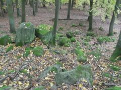 R0023768 (joachimelbing) Tags: adlerhorst oberlemp