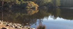 P20151117-0008—Lake Anza—Tilden Regional Park