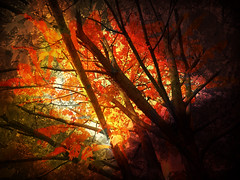 Fire Autumn (MissyPenny) Tags: autumn digitalediting fineartphotography photomanipulation orange fiery pd laich pennsylvania intense