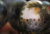 IMG_3959_SC_copy (Rene Leubert) Tags: southafrica paintedeggs oudtshoornostrichshowfarm
