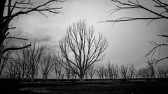 I stand alone (Fran Caparros) Tags: white lake black tree argentina rain clouds arbol lluvia ruins loneliness shadows buenos aires negro lagoon ruinas terror nublado soledad laguna blanc sombras desaparicion angustia carhue epecuen