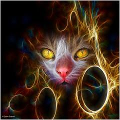 (2183) Cat (QuimG) Tags: pets cat creativity golden textures retouch retoque retoc specialtouch iphone5 quimg quimgranell joaquimgranell afcastell obresdart