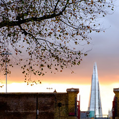 Last of the autumn leaves (Scotty H..) Tags: city uk greatbritain sunset england urban building london tower english architecture buildings evening dusk scenic landmark british picturesque wapping nightfall theshard