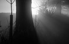 unclear moment (paul noble photography) Tags: morning blackandwhite monochrome fog morninglight maine mysterious sunrays morningsun windham foggymorning mainephotographers goldenhourlandscape paulnobleimages goldenhournikond7000 paulnoblephotography goldenhoursunrise foggylandscapemaine
