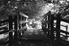 Bridge (inadan15) Tags: bridge film 35mm photography nikon ilfordxp2 ilford analogphotography 35mmphotography filmphotography homedeveloping nikonl35af2
