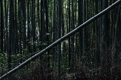 Dunkler Hain (banjipark) Tags: japan kyoto grove bamboo bambus hain