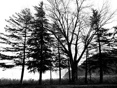 ramifications (samuele.dangelo) Tags: trees light sky bw white lake black nature monochrome contrast high outdoor ceresio